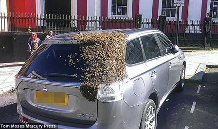 outlander-bijen